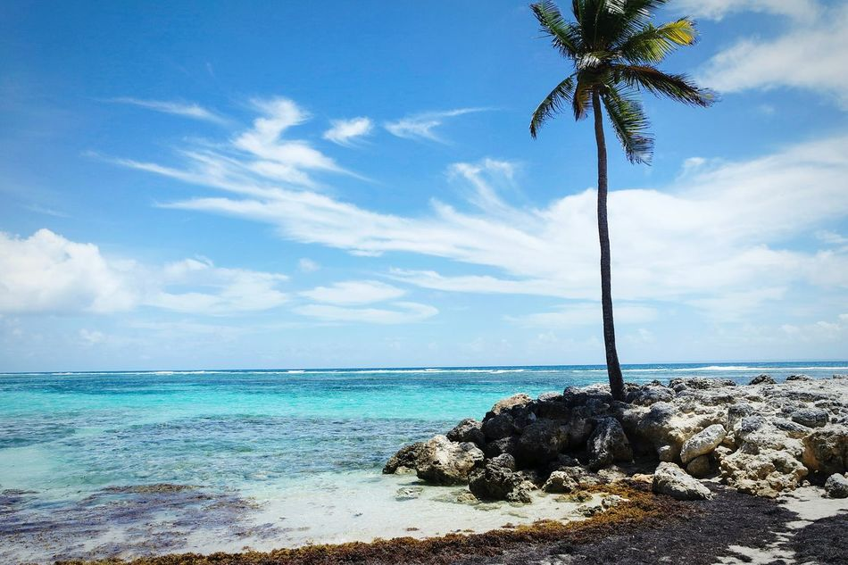 Again St. Anna Sea Palm Tree Blue Beach Tree Horizon Over Water Cloud - Sky Sky Water Nature Scenics Beauty In Nature Outdoors Tranquility Vacations Day Tropical Climate No People Single Tree Open Edit Fresh 3 Eye4photography  EyeEm Best Shots Travel Destinations Landscape