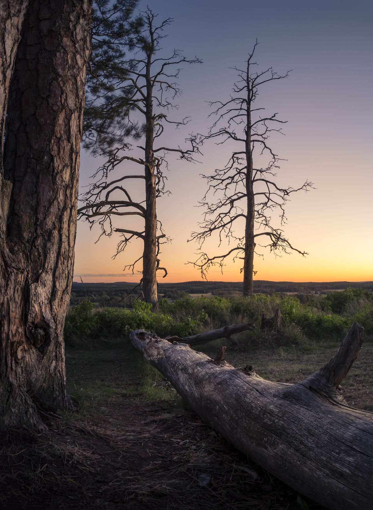 Scenic landscape with sunset and tree trunk in southern Finland Atmospheric Mood Beauty In Nature Branch Colorfull Deadwood  Forest Global Warming Green Hill Landscape Leafless Light And Shadow Nature No People Orange Outdoors Pollution Purple Sky Sunrise Sunset Tree Tree Trunk Wood Wooden