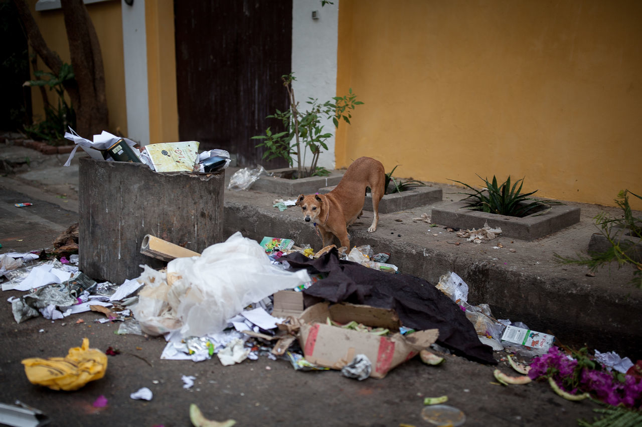 """From""""Dogs never bite me"""" rachelbandi #animal #City #crazy #cute #smile #love  #cute #daytime #dog #doglovers #ecology #skateboard #manifesto #hedicho #eyembestshot #funny #India #love #photography #pollution #street #streetphotography #yellow Animal Themes Building Exterior Day Garbage No People Outdoors Pets The Street Photographer - 2017 EyeEm Awards"""