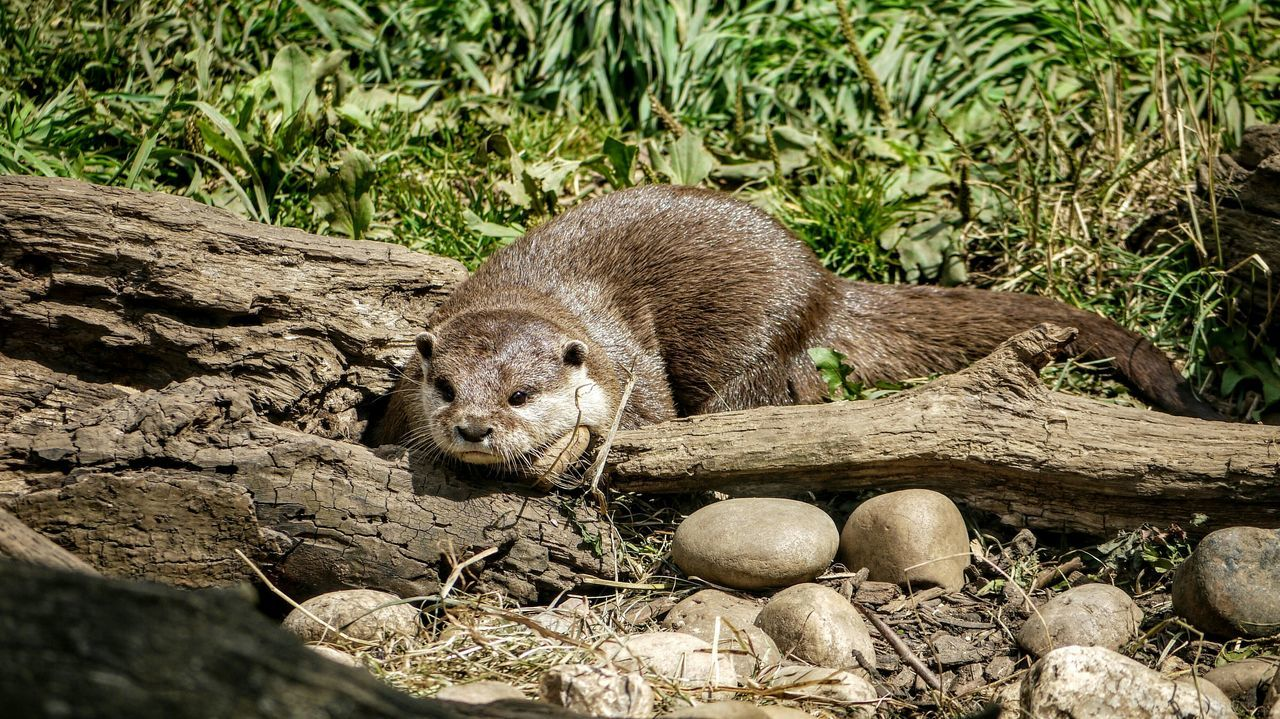 Zoo Animals  Otter Zoo Wildlife Photography Cotswold Wildlife Park