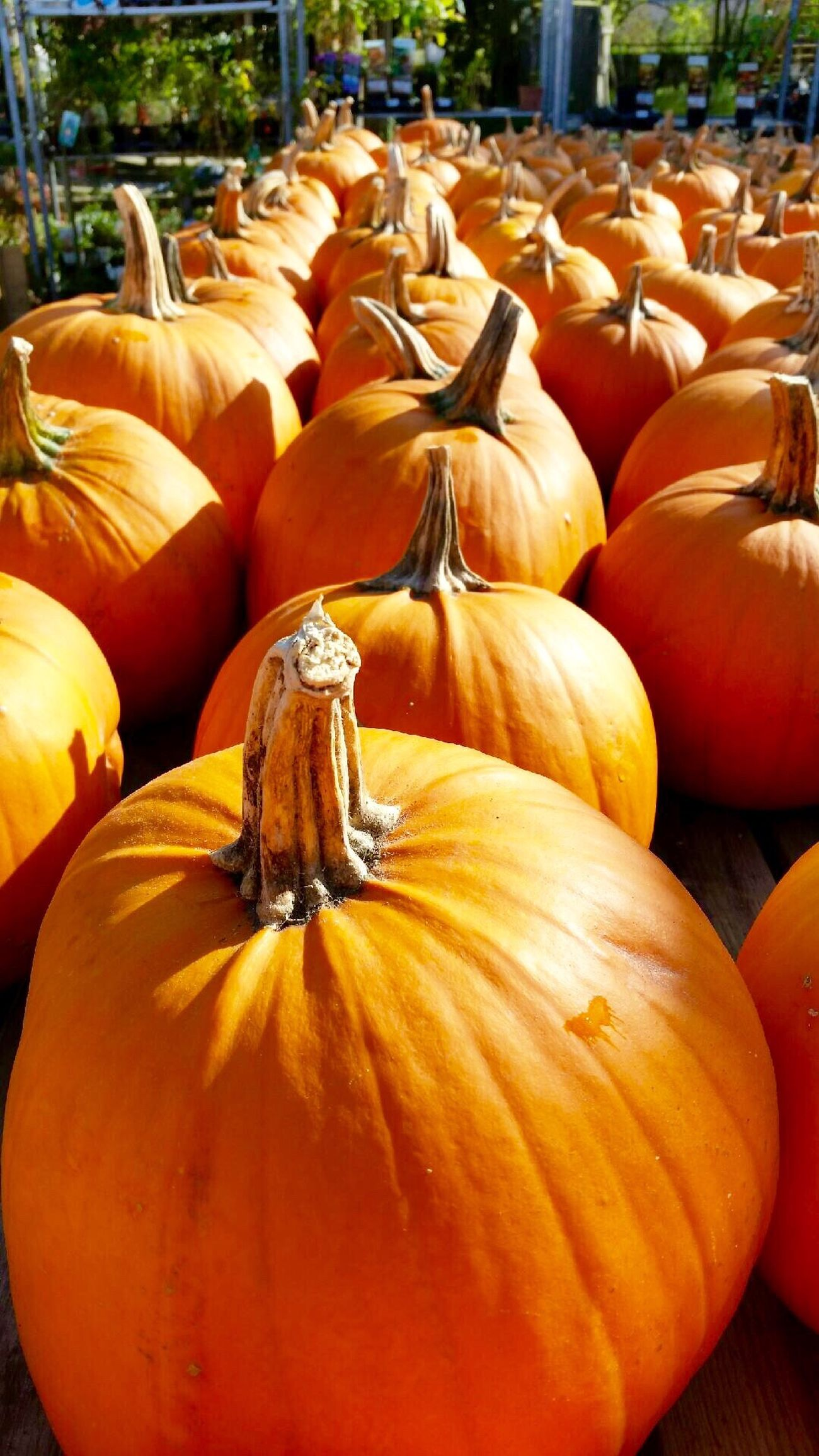 Pumpkins Pumpkin Halloween EyeEm Gallery EyeEm Best Edits EyeEmBestPics Eye4photography  Eye4delight Colors Autumn Fall