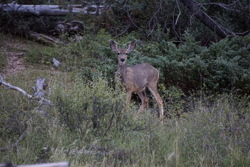 Animals In The Wild Animal Wildlife Outdoors Deer Tree