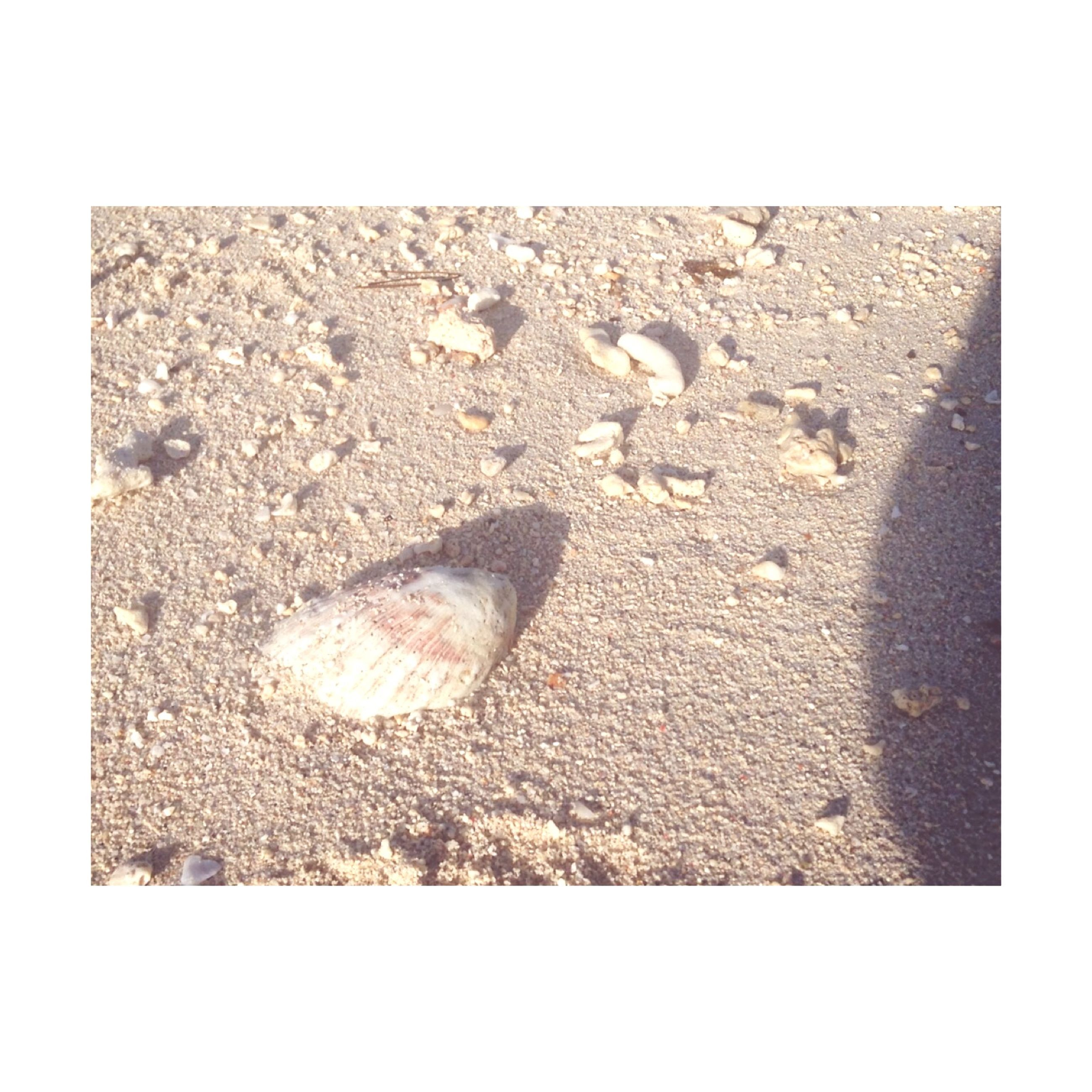 transfer print, high angle view, auto post production filter, sand, stone - object, beach, close-up, ground, textured, abandoned, still life, no people, dirty, day, pebble, outdoors, directly above, copy space, footprint, seashell