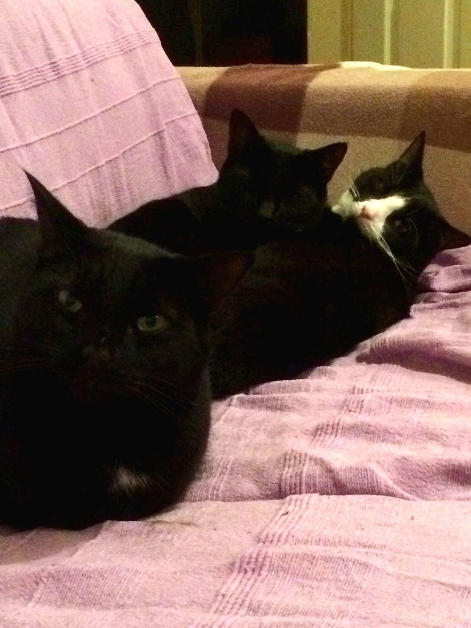 I Am Watching You Cats Trio