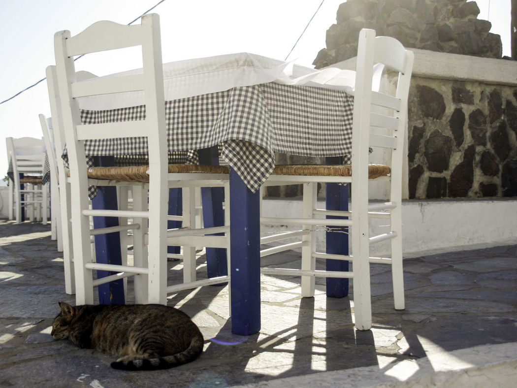 Chair Development Empty Empty Table Exterior Floor Flooring Greece Holiday Hot Afternoon Laziness Lazy Naxos Resting Cat Side By Side Sitting Sleeping Cat Structure Summer Table Tiled Floor Vacations Waiting