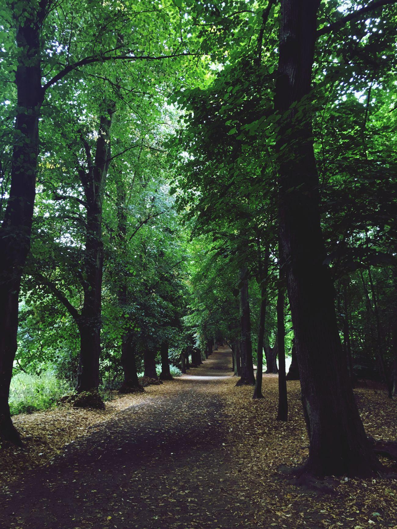 Nature Trees London Hampstead Heath