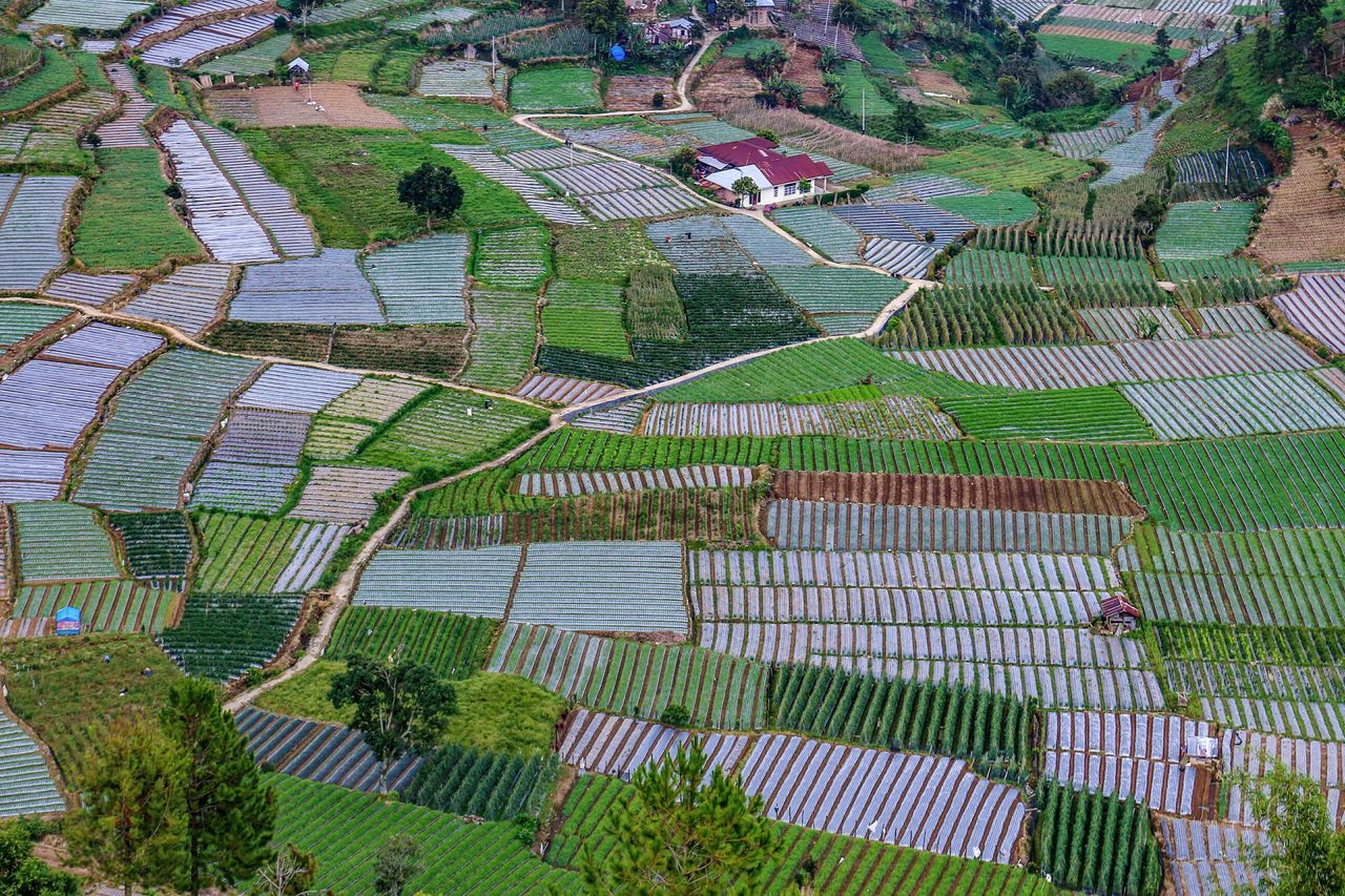 Abstract in the field Beauty In Nature Green Color Nature Agriculture Rural Scene Wonderfulindonesia Landscape