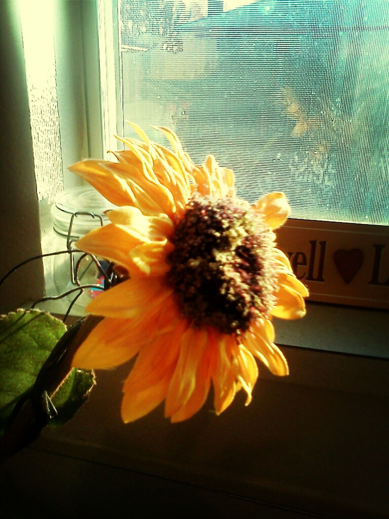 Your The Sun To My Flower