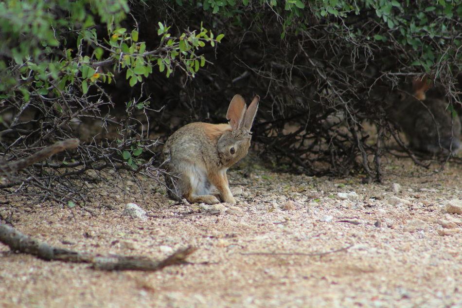 Beautiful stock photos of osterhasen, Animal Themes, Animal Wildlife, Animals In The Wild, Day