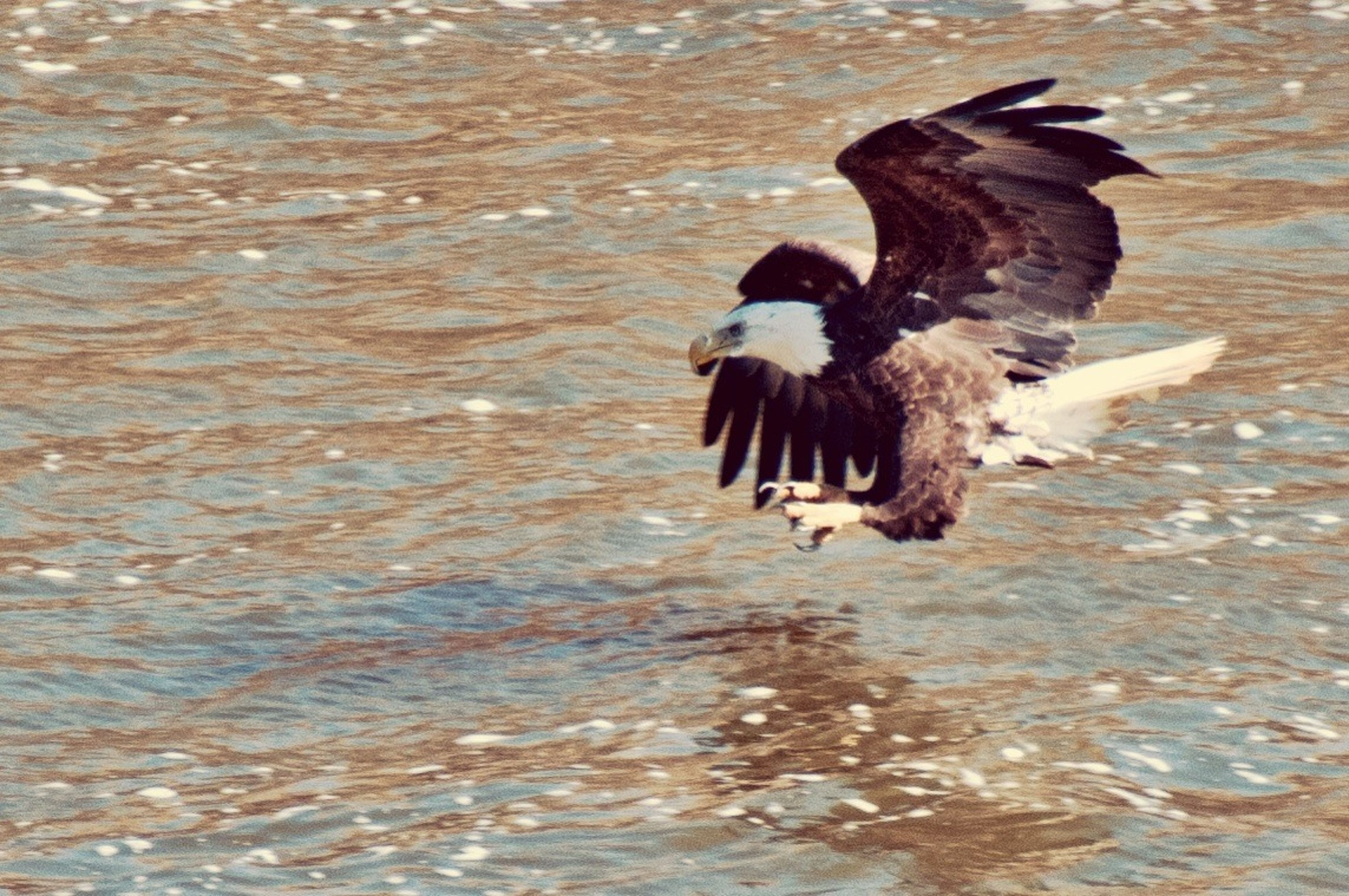 water, animal themes, animals in the wild, wildlife, bird, one animal, waterfront, lake, nature, rippled, high angle view, reflection, day, outdoors, rock - object, no people, duck, swimming, beauty in nature, tranquility