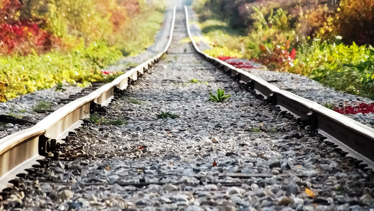 Railroad Track On Field Amidst Plants