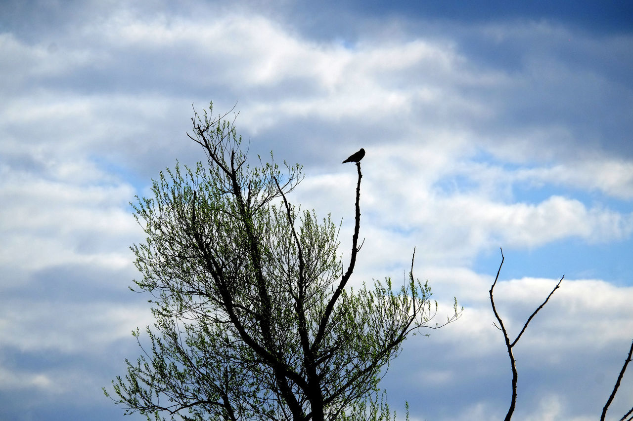 Low Angle View Of Bird On Tree Branch Against Cloudy Sky