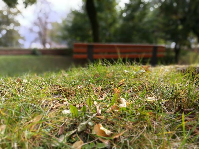 Bench Green Plant Nature Green Color Grassy Beauty In Nature After Rain :) Selective Focus Grass Autumn Colors Sunny