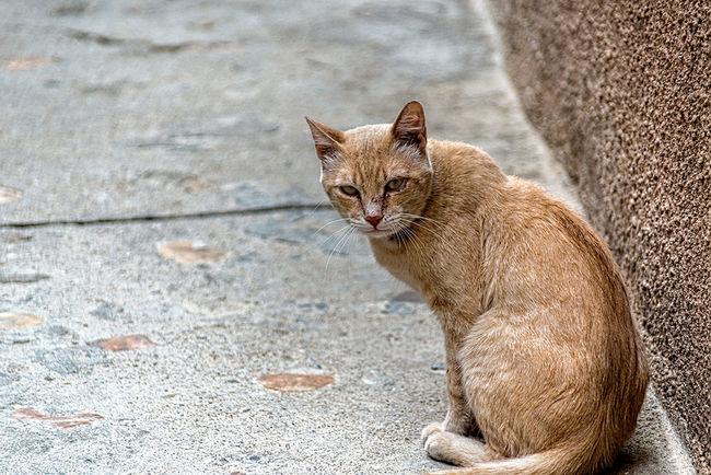 Nikon Dslr Relaxing Somosfelices Love Cats
