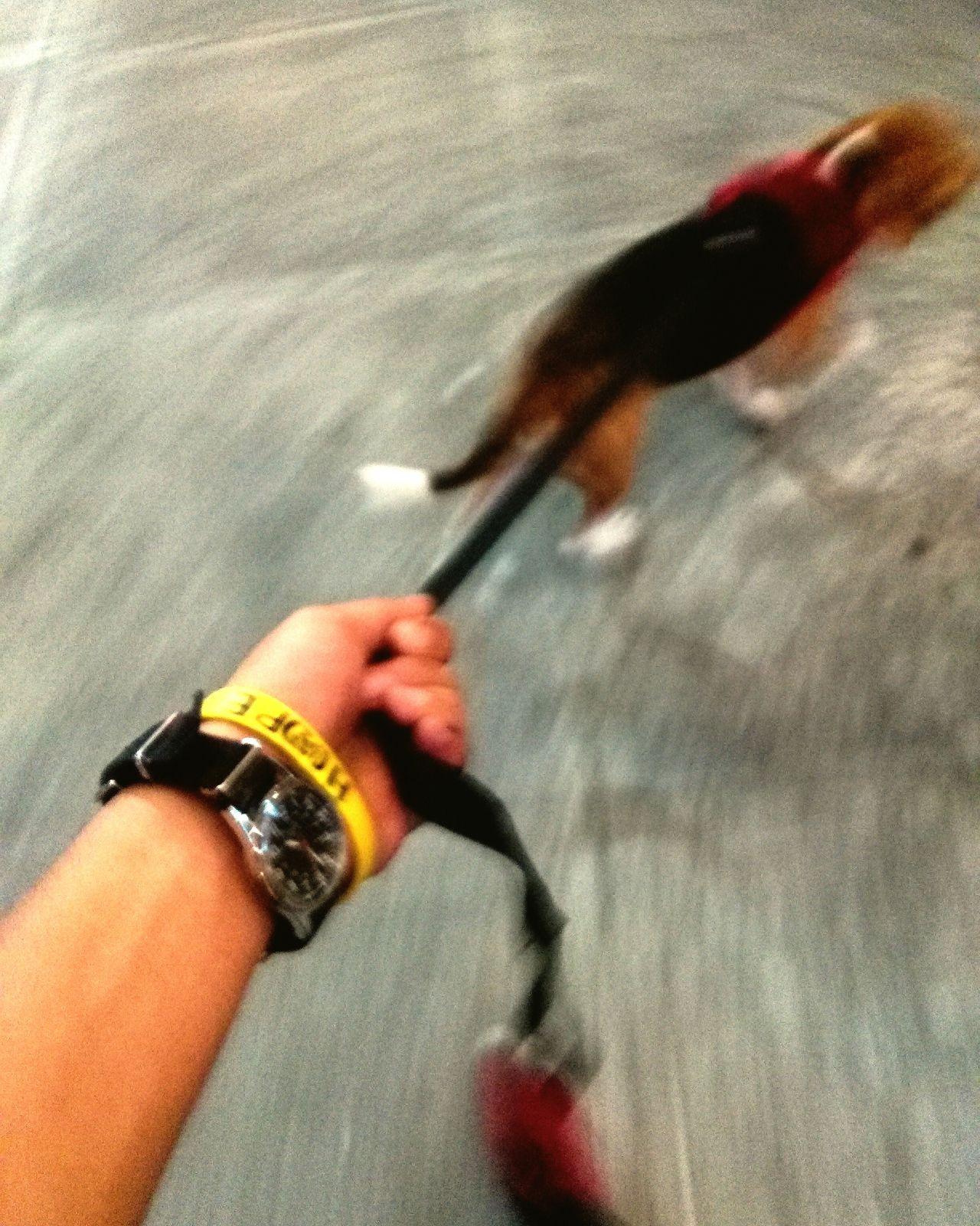 Beagle First Eyeem Photo