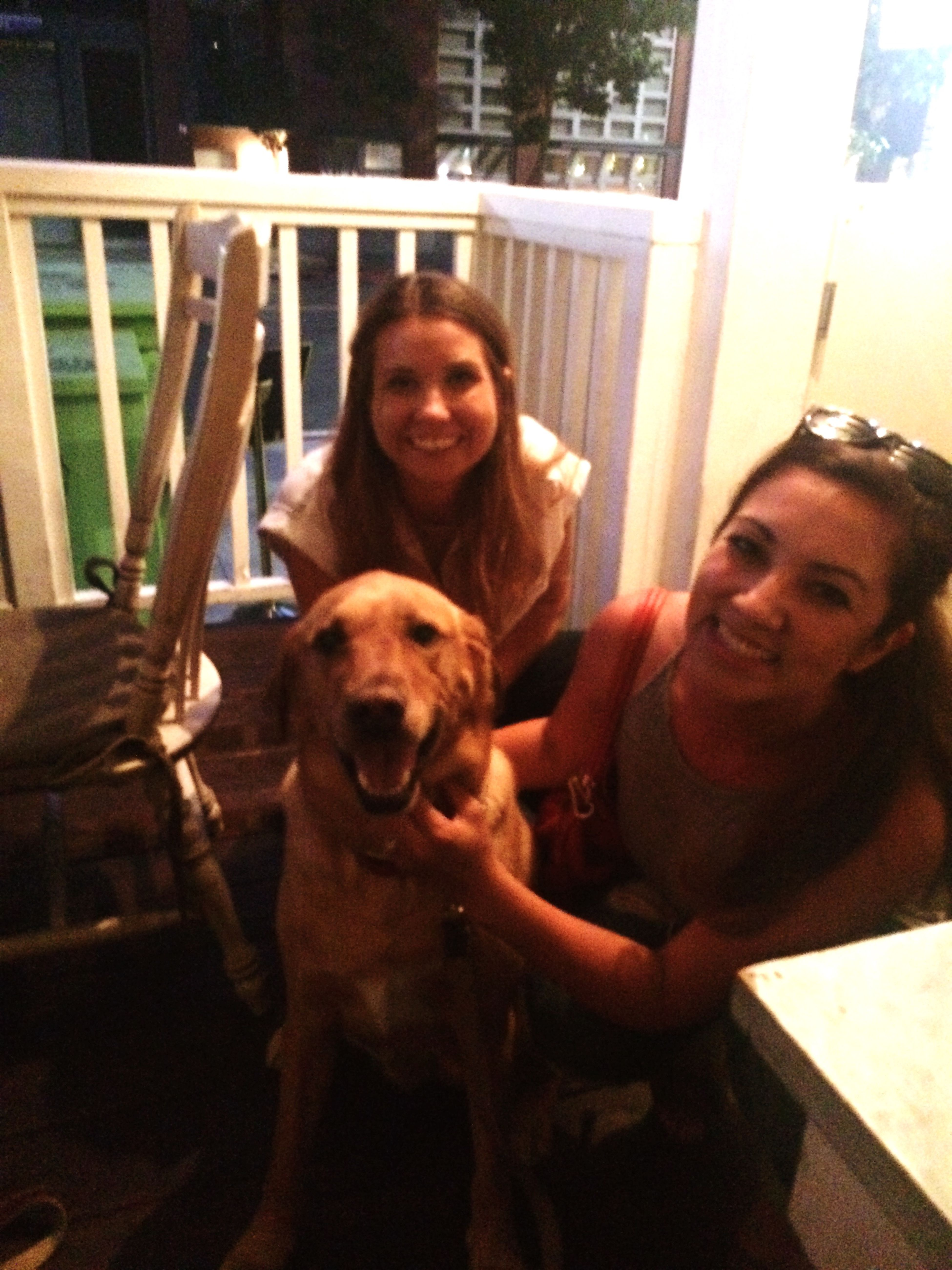 Found me the sweetest lab.. Missing my pup back home