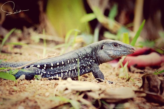 Lizard? NEXTshotPhotos Eye4photography  Naturelovers Portrait