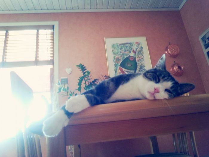 Just Chillin' ✌ Relaxing My Cat Vacation Time