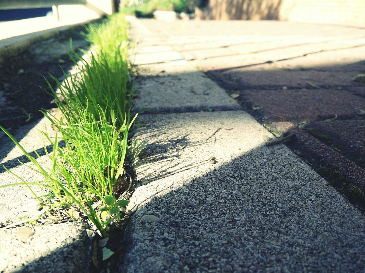 Growth Self Improvement Path Road Urban Landscape Close Up Architecture Texture Perspective Background Wherever Whenever Natural Pattern Wellness