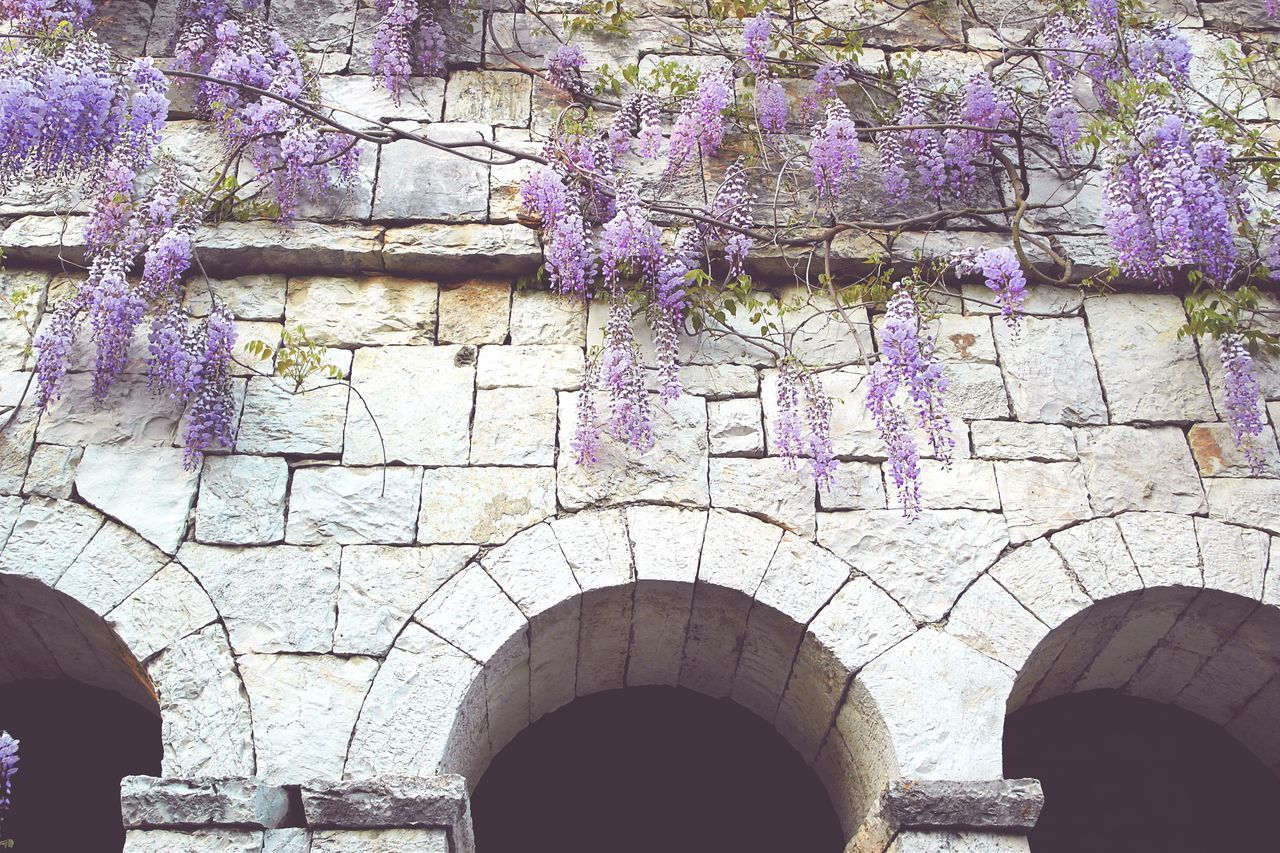 Architecture Arch Flower Purple No People Day Built Structure Outdoors Tree Nature Wisteria Wisteria Flower Liana Historical Building Scenery Scenics Scenic Nature Is Art Lines, Shapes And Curves Textures And Surfaces