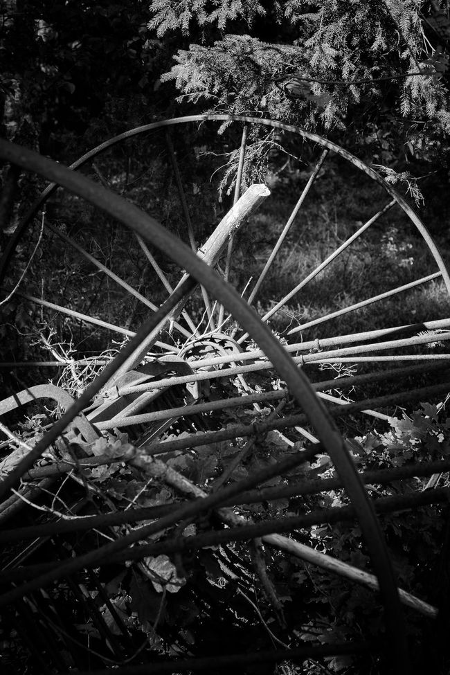 Old abandoned harrow in the woods near the meadow - Abandoned Agricultural Equipment Black & White Black And White Branch Exceptional Photographs EyeEm Best Shots - Black + White First Eyeem Photo Found In The Forest Full Frame Gear Harrow Light And Shadow Messy Monochrome Monochrome Photography Non-urban Scene Old Outdoors Scenics Selective Focus Taking Photos Tranquility Uncultivated Walking Around