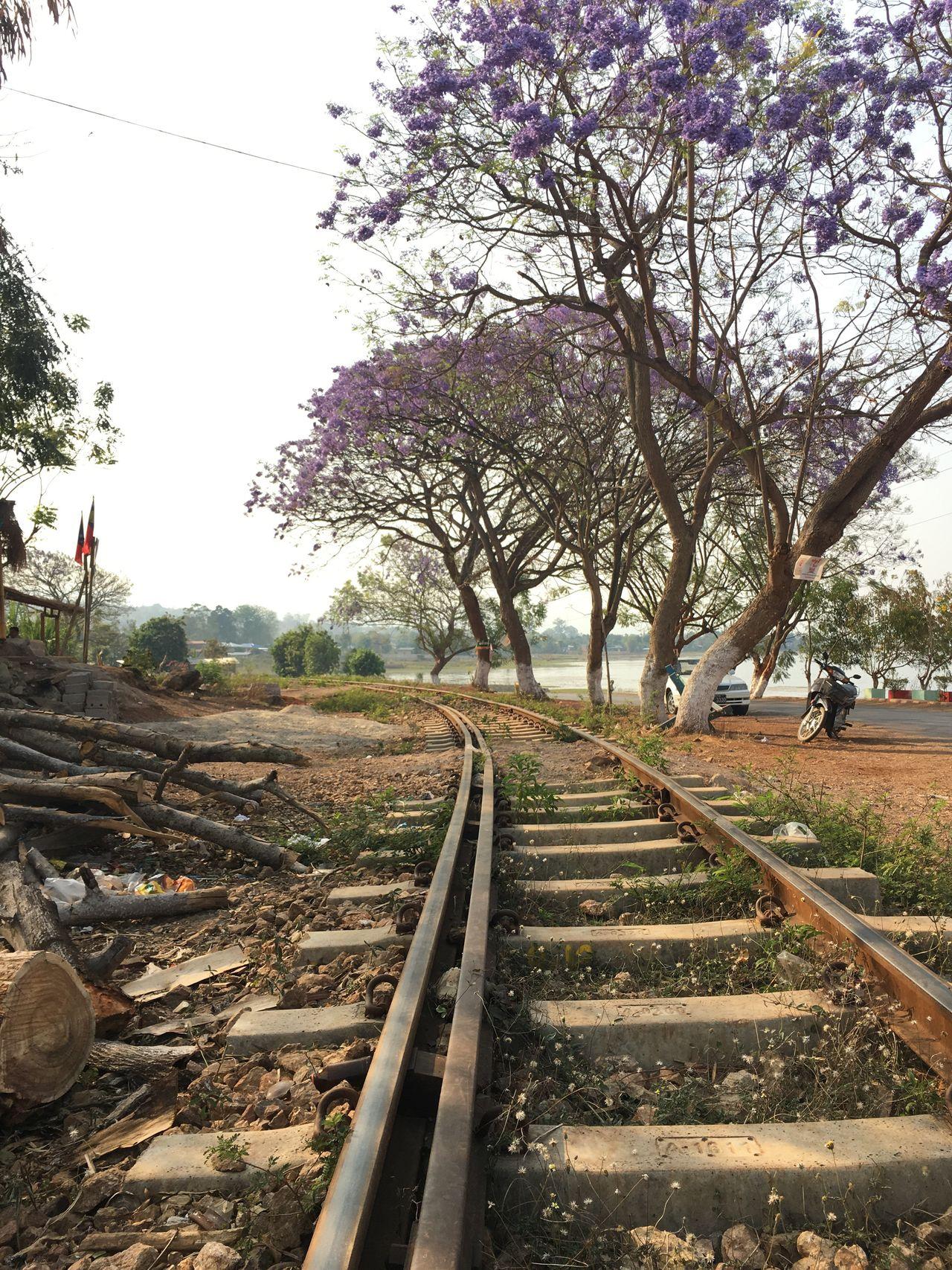 Railroad Track Railing Blue Flowers Phe Kone