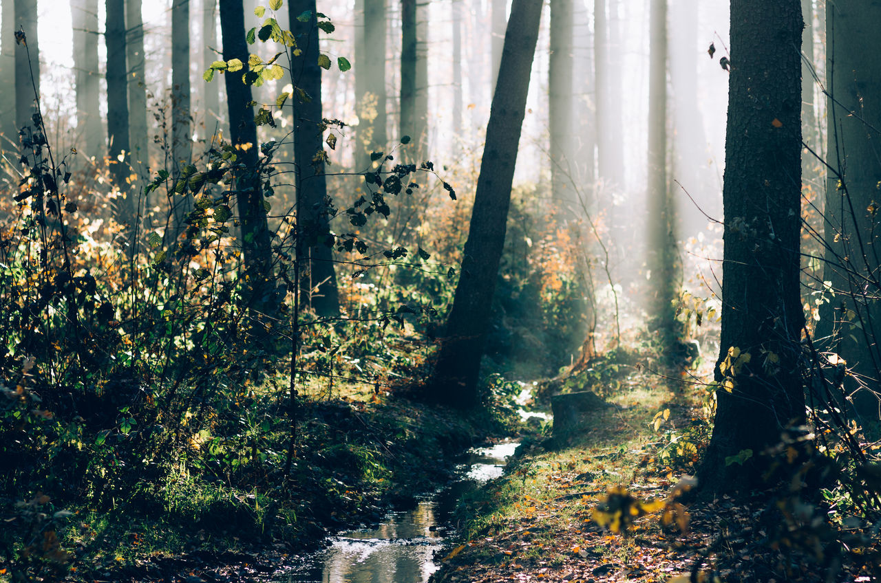 November mornings... Sunlight Sunbeams Early Morning Autumn Autumn Leaves Autumn Colors Misty Morning Misty Forest Outdoors Nature Beauty In Nature Fog Tree Forest Photography Trees No People Germany Morning Light Mist Foggy Klaquax@home