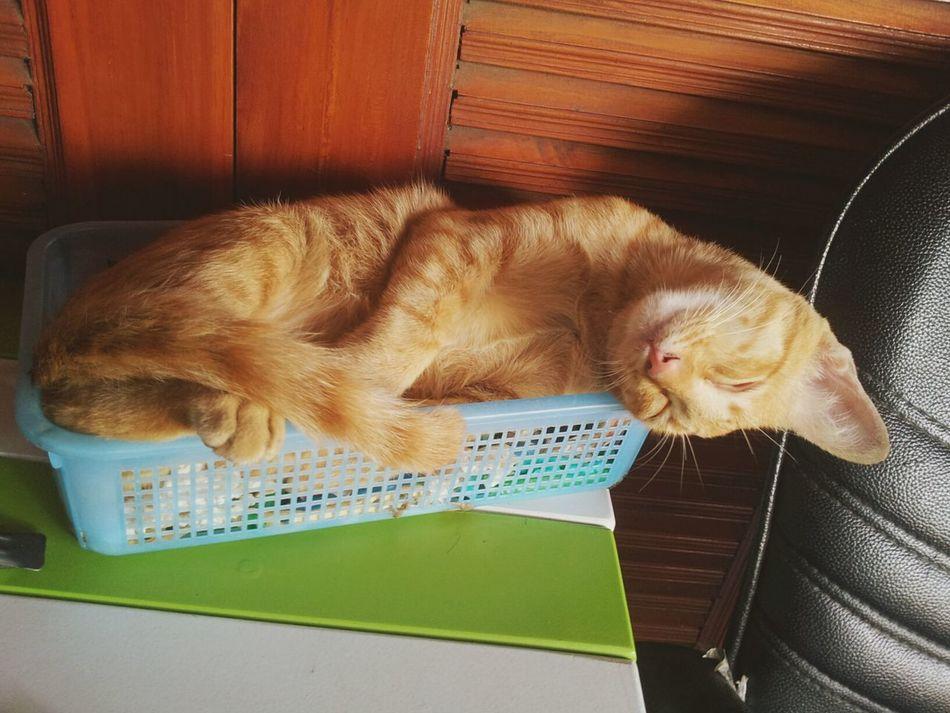 แมว..เหมียว^^^^