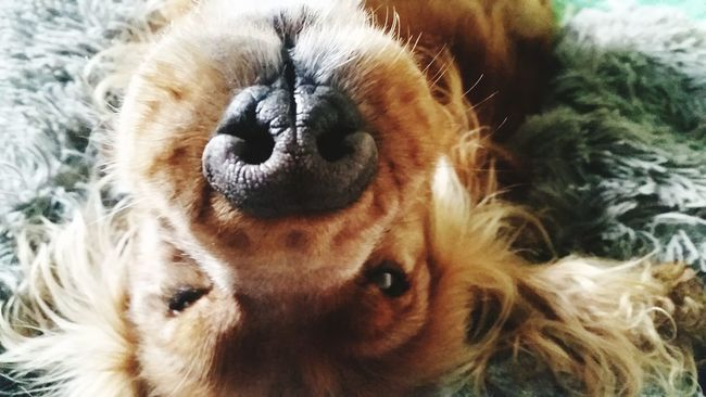 MyLove❤ Lovelovelove∞ Ilovemydog Puppy❤ DogLove Dog #dog #puppy #pup #TagsForLikes #cute #eyes #instagood #dogs_of_instagram #pet #pets #animal #animals #petstagram #petsagram #dogsitting #photooftheday #dogsofinstagram #ilovemydog #instagramdogs #nature #dogstagram #dogoftheday #lovedogs #lovepuppies Hashtags Merry Christmas! Letitsnowletitsnowletitsnow Lovely