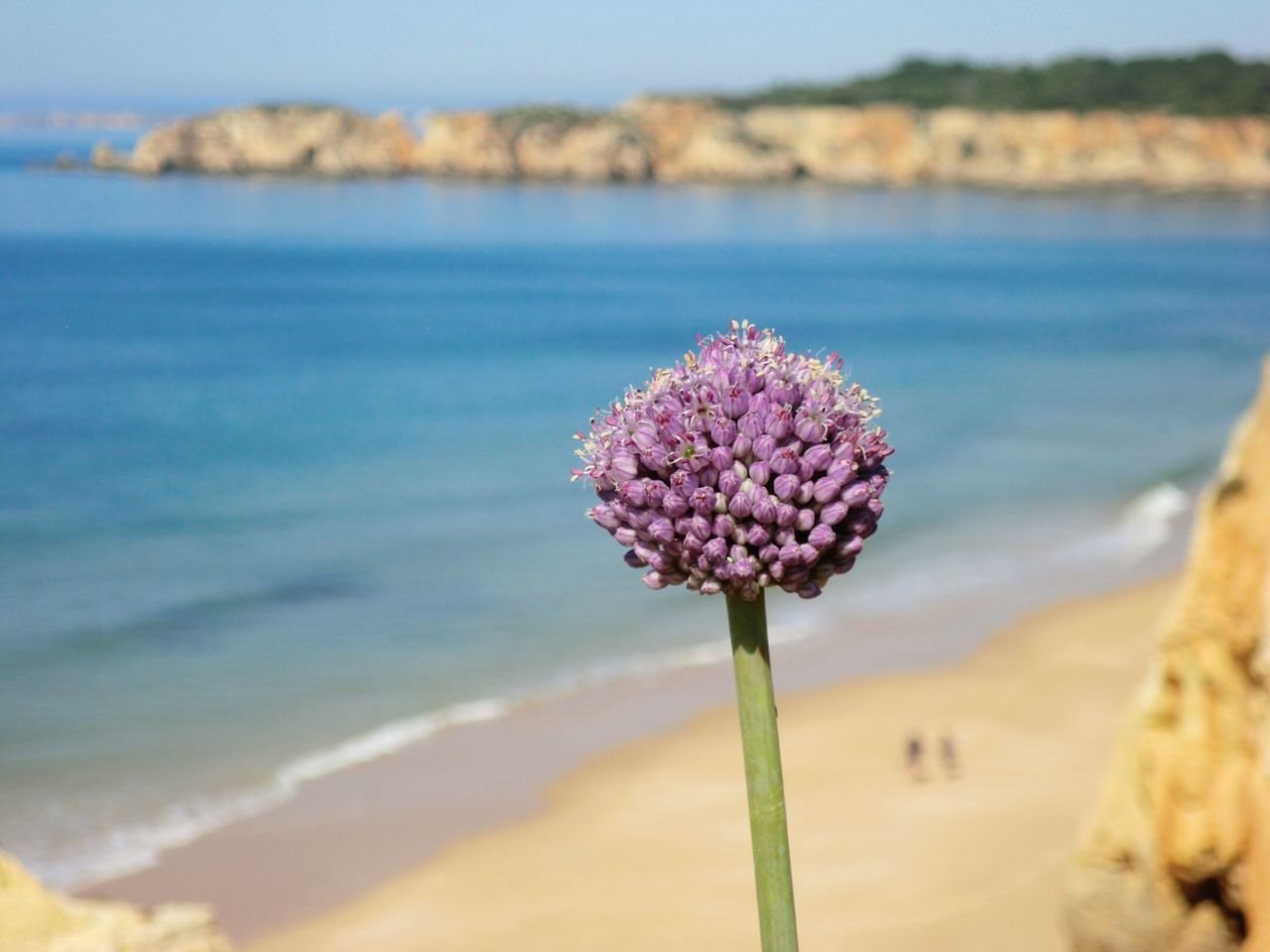 Hanging Out Taking Photos Natureza Local Nature Portimao Beach Beauty In Nature Landscape