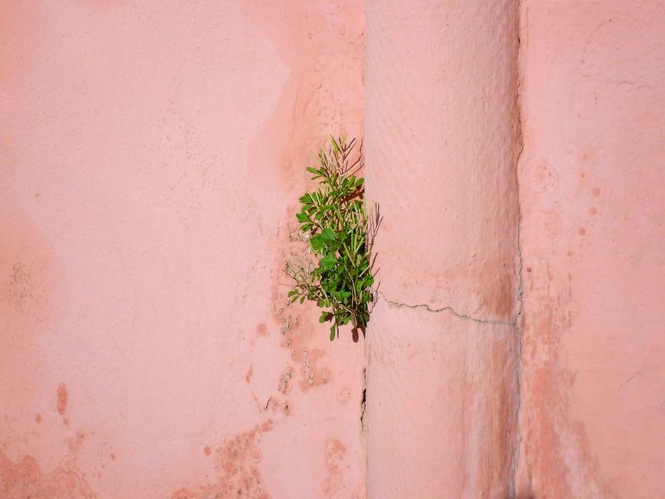 Nature Plant Growth Pink Wall No People Outdoors Tree Day Minimal Composition Adapted To The City