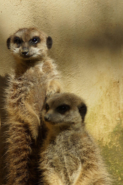 Madagascar  EyeEm Animal Lover Animal_collection Lemur