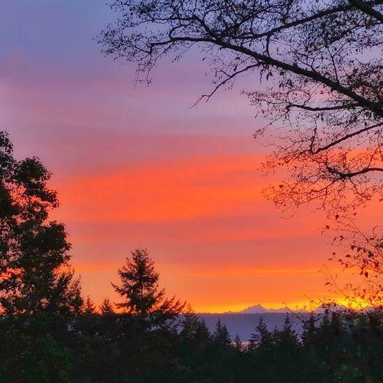 Sunrise Morning Light Morning Sky Tree