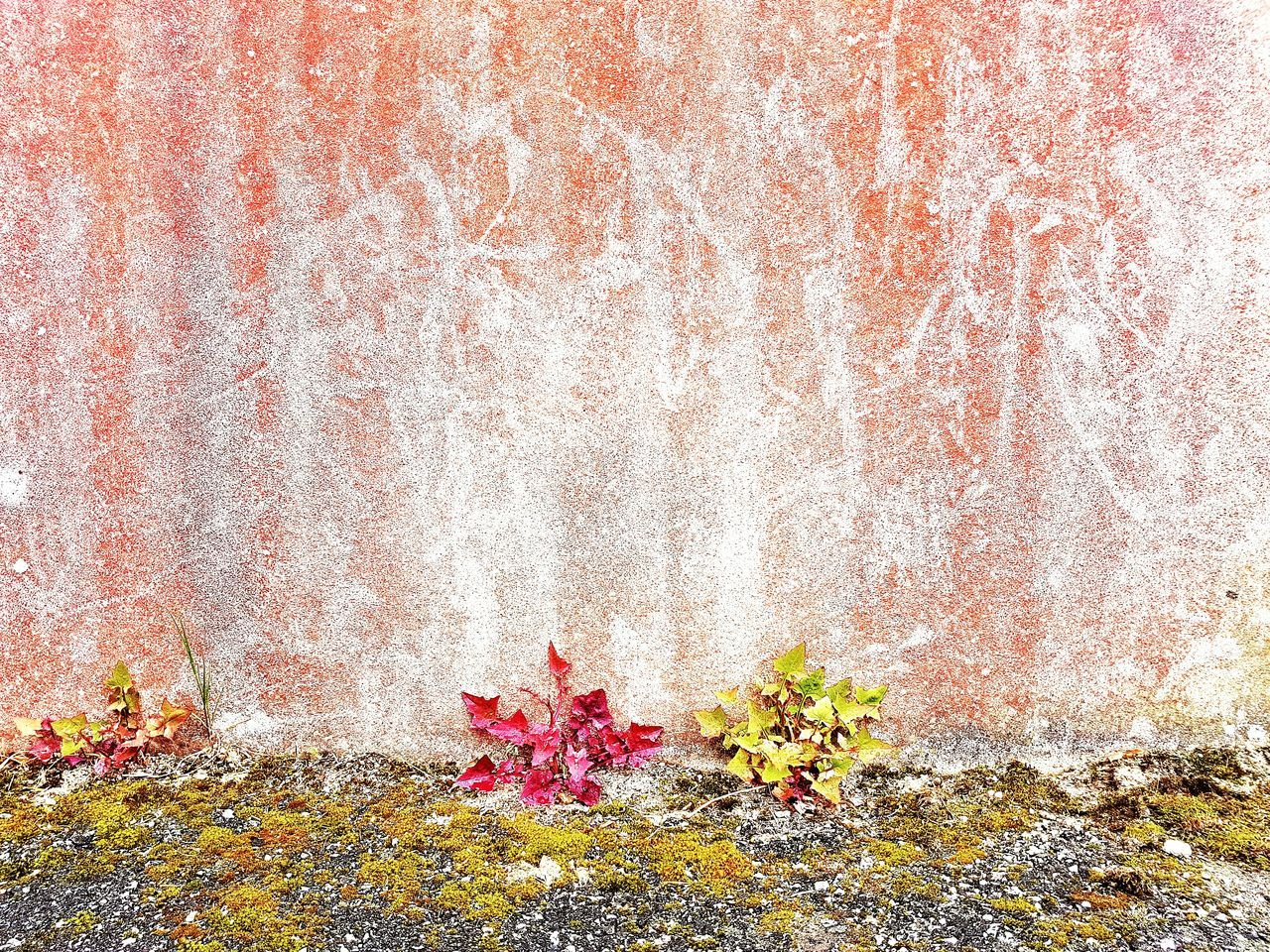 We grow together No People Backgrounds Plant Wall Textures Wallporn Wall Murals Concretewall Flowers,Plants & Garden