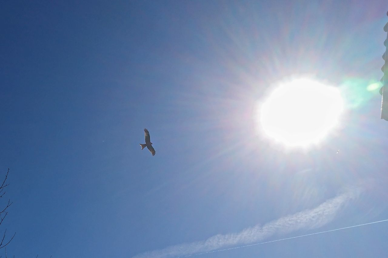 sun, flying, sunlight, bright, low angle view, sunbeam, lens flare, mid-air, nature, day, no people, sky, outdoors, beauty in nature, clear sky, airplane, bird
