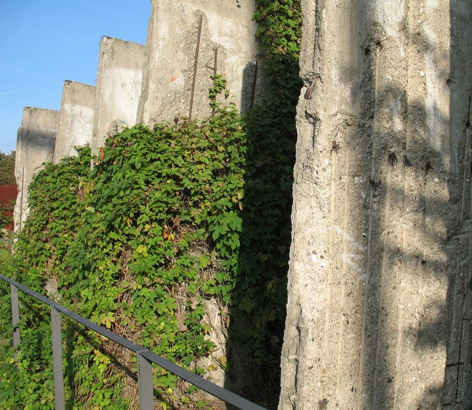 Berlin Berlin Mitte Berliner Mauer Bernauer Strasse Blue Close-up Day DDR DDR Grenze Focus On Foreground Green Green Color Grenze Growth Mauer Nature No People Outdoors Plant Sunny Wall