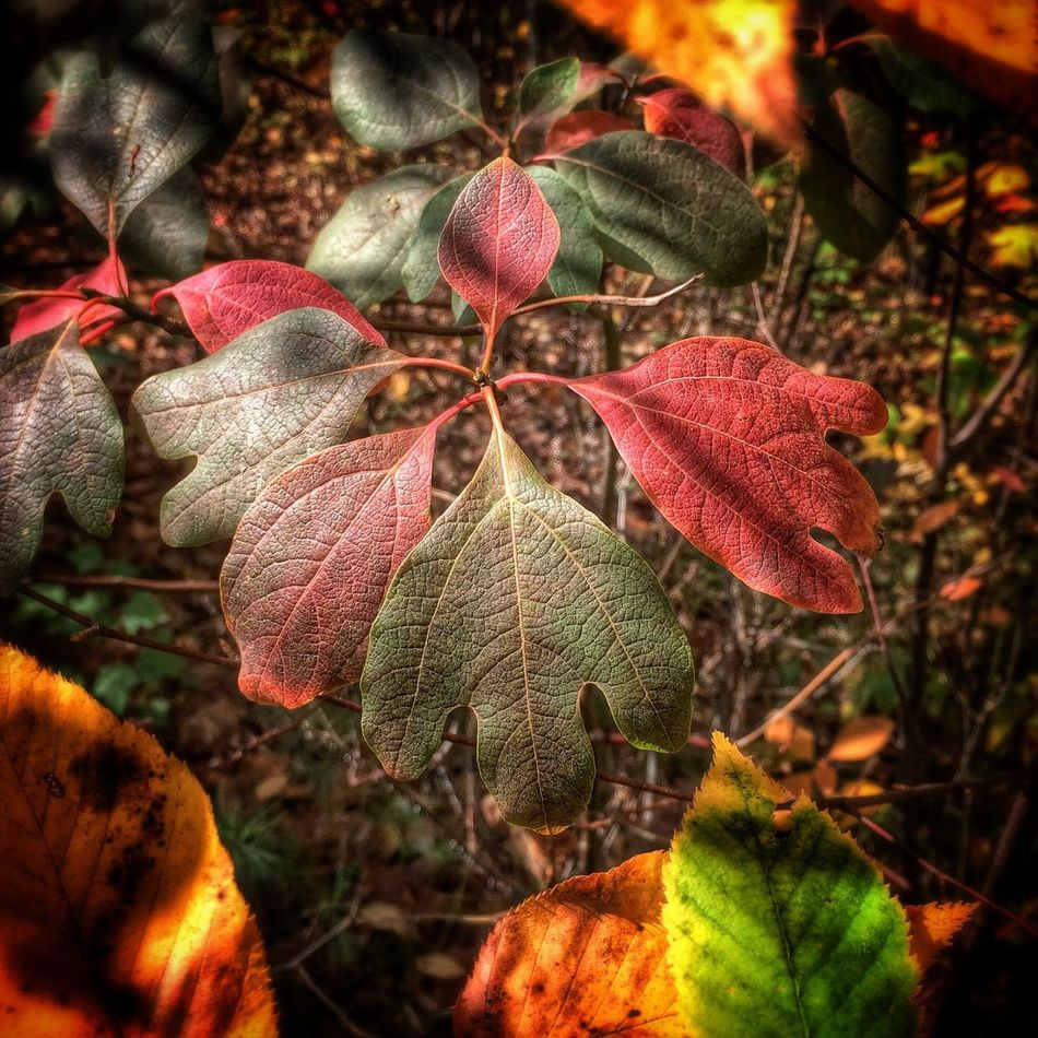 ✨❤️?????✨...Colori Tadaa Community Autumn Leaves EyeEm Nature Lover