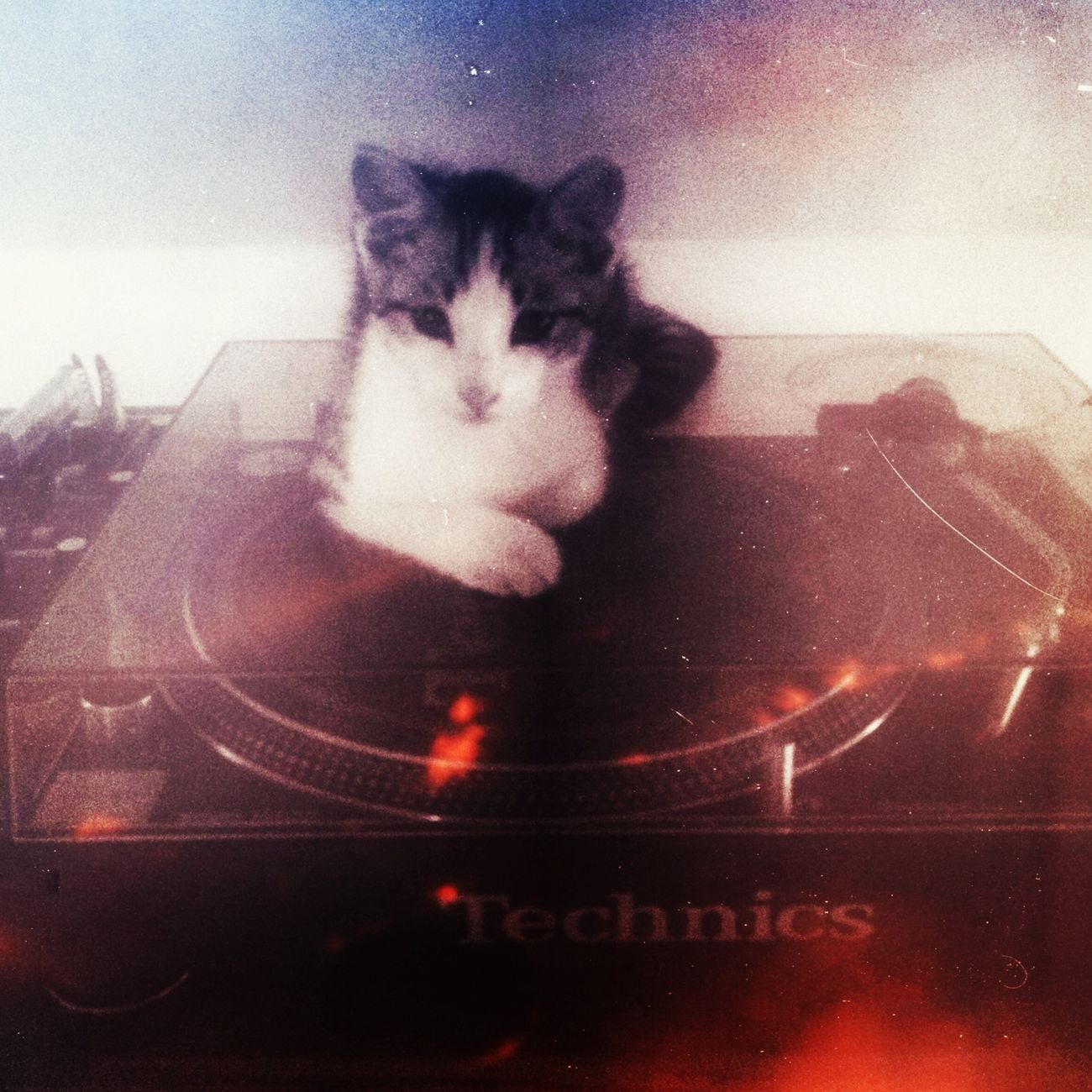 my sweet vinyl lover Music Vinyl My Cat