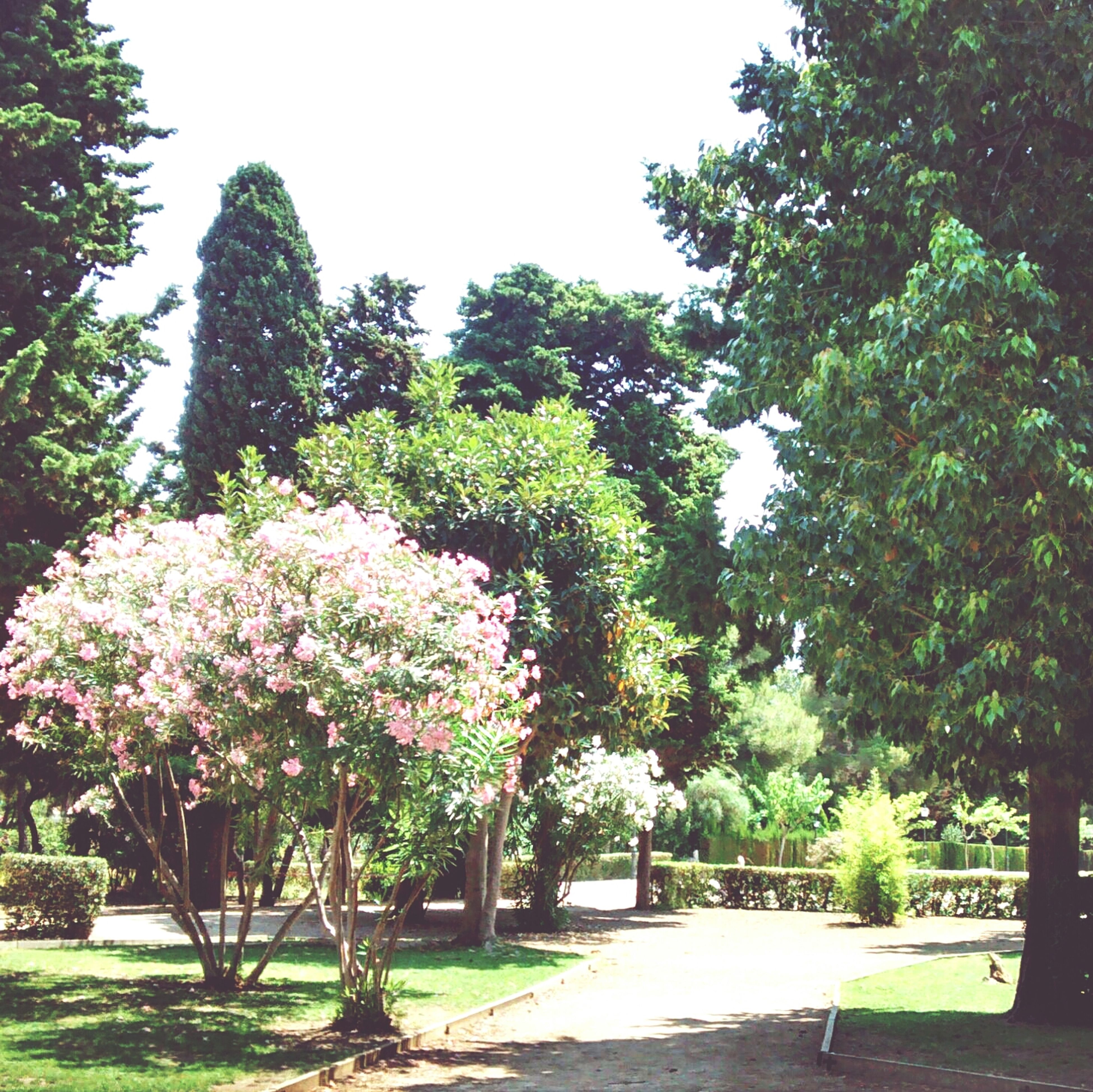 tree, flower, growth, park - man made space, beauty in nature, nature, the way forward, freshness, footpath, tranquility, green color, sunlight, park, branch, tranquil scene, day, clear sky, plant, blossom, formal garden