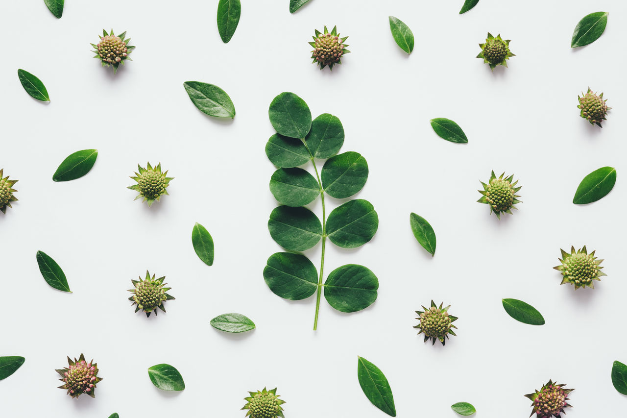 Green leaves arrangement on white background. Above Arrangement Backgrounds Close-up Green Color Growth High Angle View Layout Leaf Nature Pattern Plant Wallpaper White Background