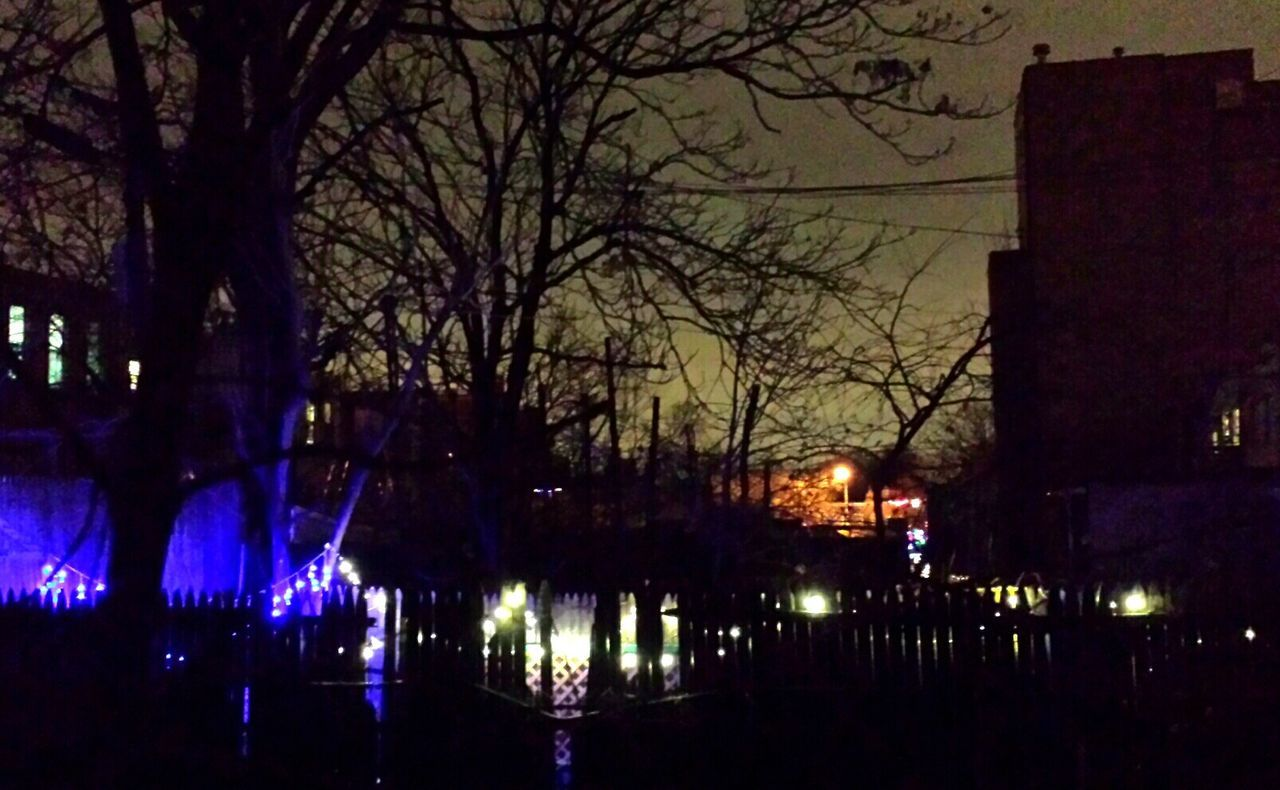 Backyard Lights Bare Tree Brooklyn City Life Cold Temperature Holiday Season  Silhouettes Tree Urban Winter