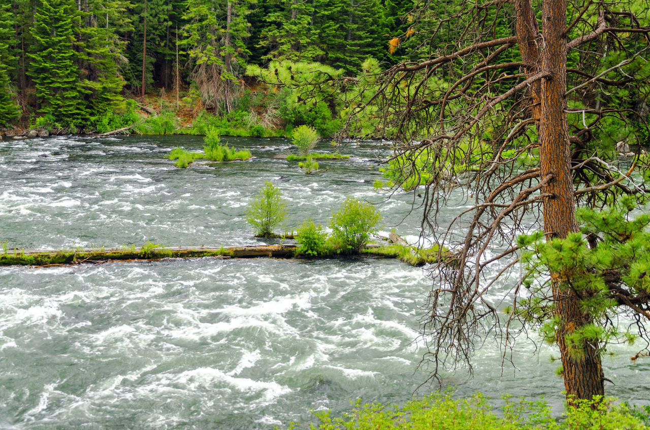 View of the Deschutes River rushing by a forest in Central Oregon Bend Central Oregon Colorful Deschutes Deschutesriver  Forest Grass Landscape Nature Oregon Outdoors Park Rapids River Rushing Tourism Travel Tree United States View Water Wild Wood