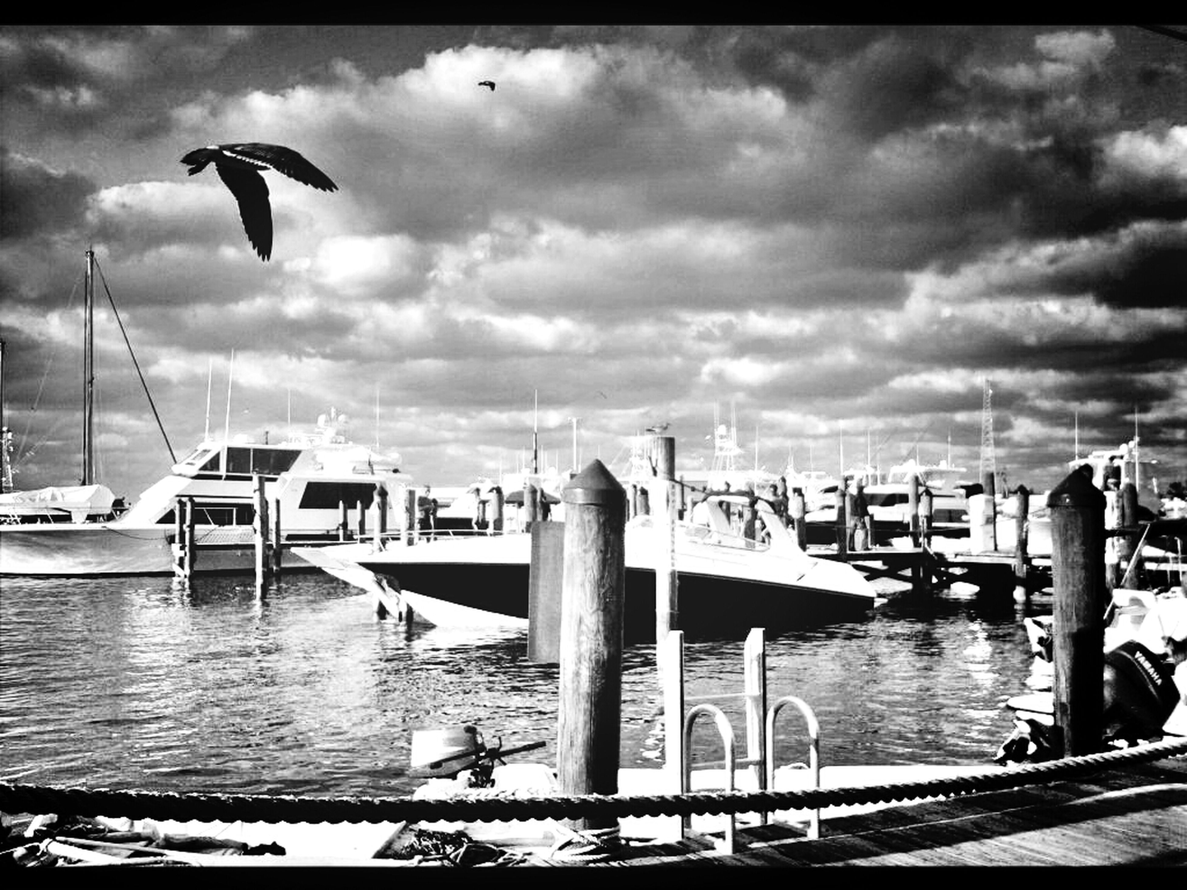 nautical vessel, water, sky, transportation, mode of transport, bird, cloud - sky, boat, moored, sea, cloudy, flying, animal themes, wildlife, harbor, pier, animals in the wild, cloud, seagull, built structure