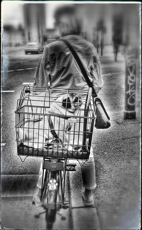So lass ich mir das gefallen Biking By… Dog Days Pets Travel
