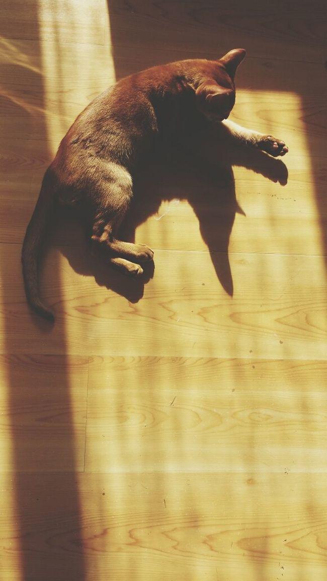 mjau . Kitty Simplicity Cutie