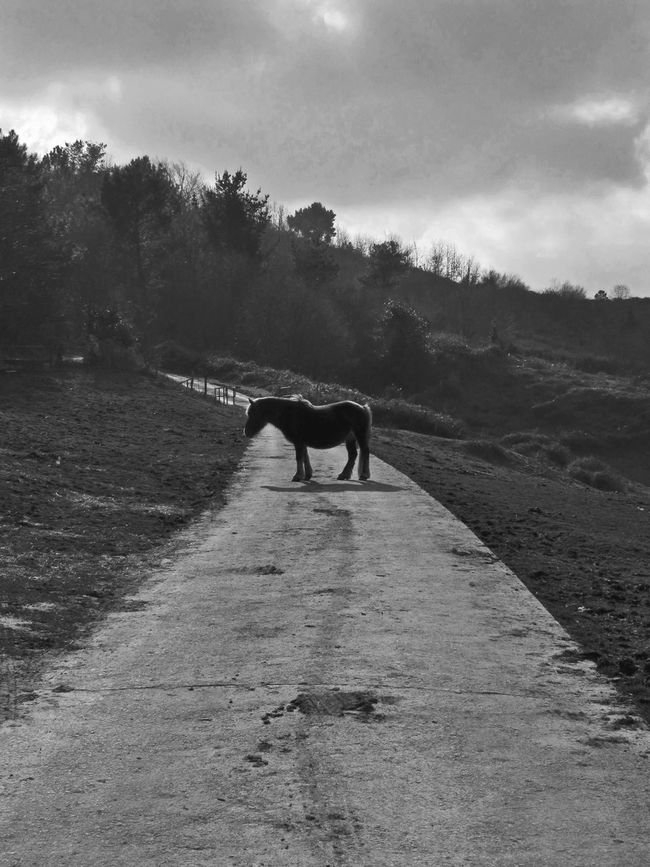 The difference between a stumbling block and a stepping stone is how high you raise your foot.- Lewis Blackandwhite EyeEm Best Shots - Black + White Nature_collection Vscocam Horses AMPt_Nature NEM Black&white