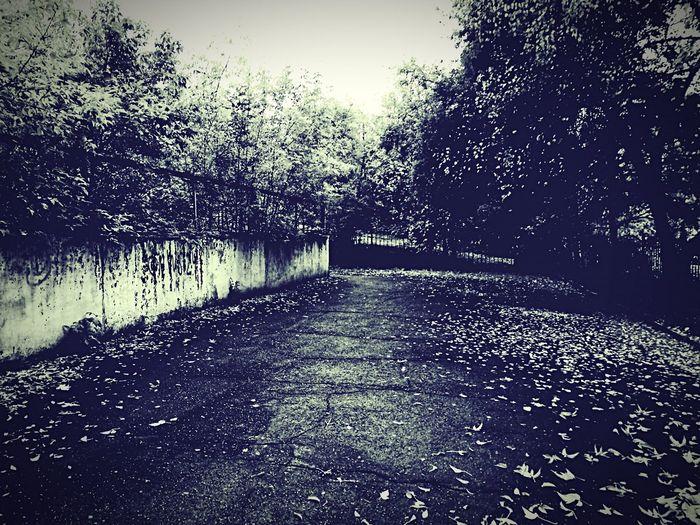 Black and white 😁 Day City No People Autumn Street Krasnoyarsk