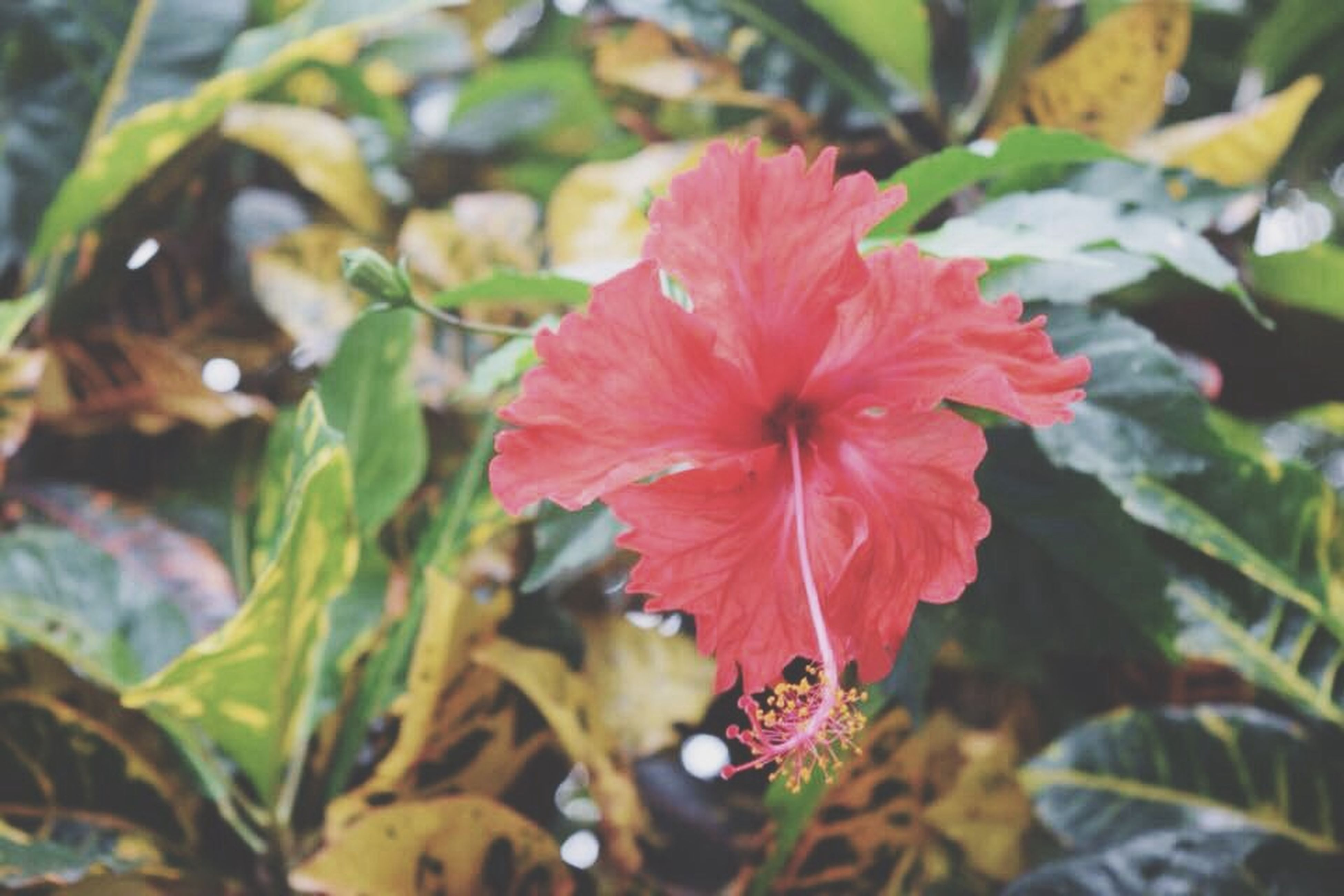 flower, growth, petal, freshness, fragility, flower head, beauty in nature, plant, close-up, leaf, red, nature, focus on foreground, blooming, in bloom, selective focus, single flower, day, orange color, outdoors