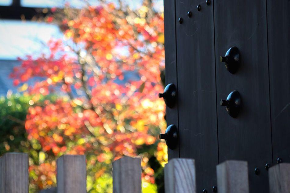 Flowers,Plants & Garden EyeEm Nature Lover From My Point Of View Door Nature On Your Doorstep Old Door Doorart Doors Lover