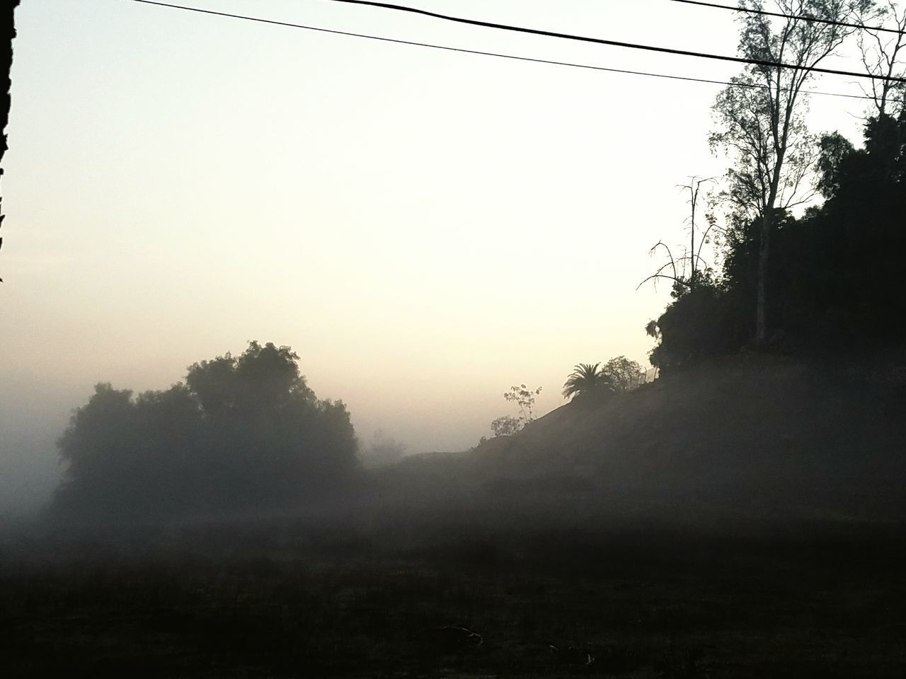 Fog Tree Sunrise Walk To Work No People Early Morning Outdoors Beauty In Nature Day Nature Silhouette Tranquility